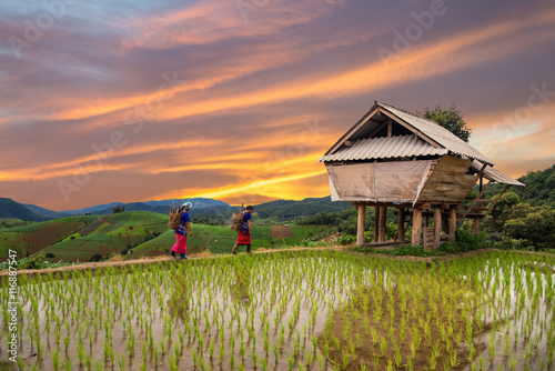 Fotobehang Rijstvelden Hmong woman with rice field terrace background in Chiangmai , Th