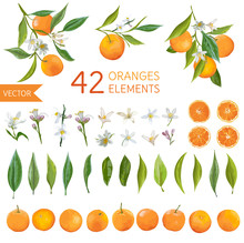 Vintage Oranges, Flowers And L...