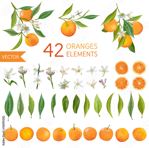 Vintage Oranges, Flowers and Leaves. Lemon Bouquetes. Watercolor Style Wall mural
