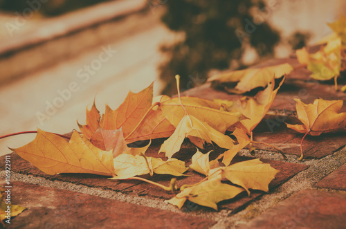 Staande foto Herfst Autumn maple leaf lying on the tile, seasonal fall natural vintage hipster background
