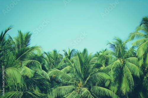 kokosowi-drzewka-palmowe-przy-tropikalnym-plazowym-rocznika-filtrem