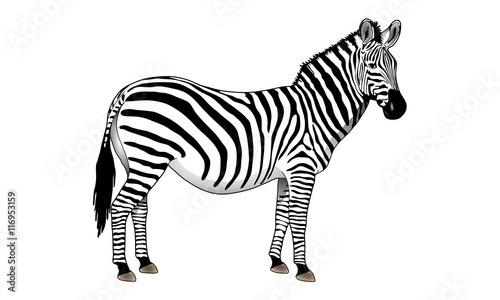 Poster Zebra Zèbre.