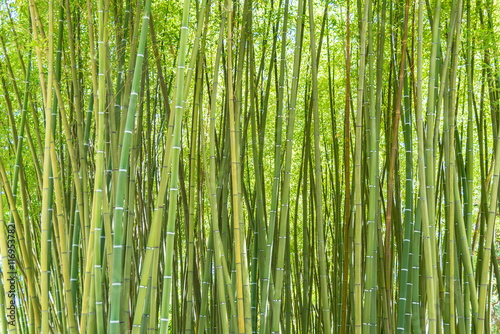 Foto op Plexiglas Bamboe bamboo forest