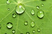 Lotuseffekt Mit Wassertropfen Auf Der Oberfläche Einer Kapuzinerkresse