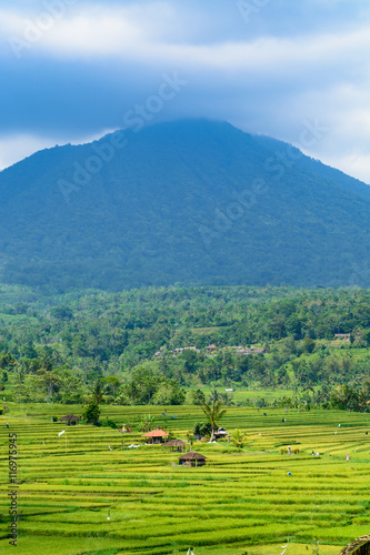 Poster Lime groen Scenic rice terraces in Bali with a mountain in the background
