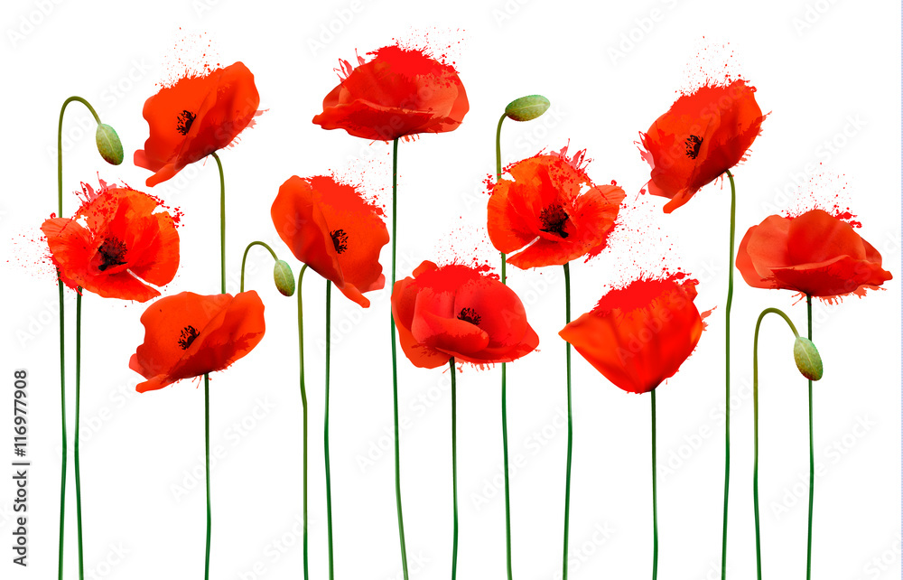 Fototapety, obrazy: Abstract background with red poppies flowers. Vector.