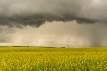 Storm Over Canola