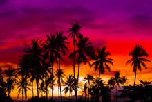 Silhouette Coconut Palm Trees ...