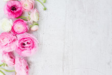 Pink And White Ranunculus Flow...