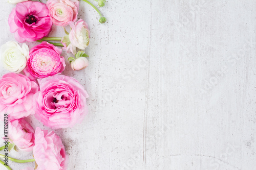 Aluminium Prints Floral Pink and white ranunculus flowers