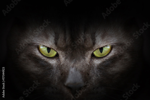 Keuken foto achterwand Panter Eyes of black cat in dark, Hypnotic Cat Eyes