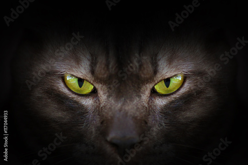 Aluminium Prints Panther Eyes of black cat in dark, Hypnotic Cat Eyes