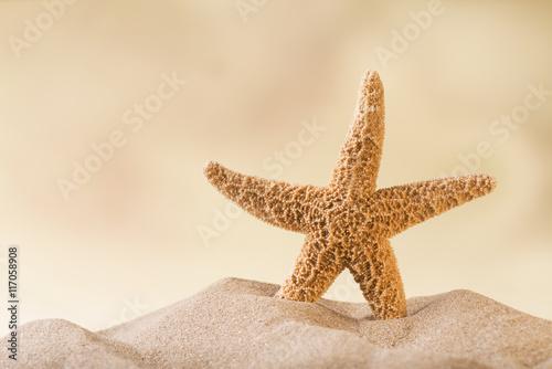 stella di mare Poster