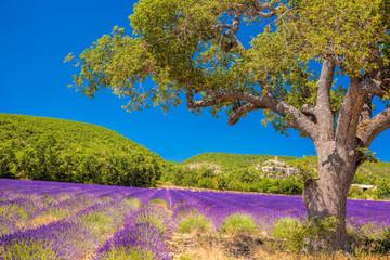 Obraz na SzkleSimiane la Rotonde village with lavender field in Provence, France