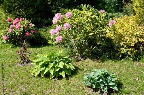 Foto op Canvas Tuin Landscape design with the blossoming rhododendron and hosts. Cor