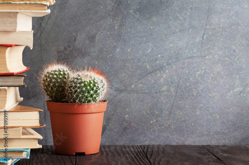 Papiers peints Cactus Books and cactus in front of classroom chalk board