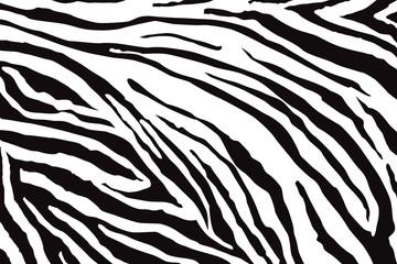 Fototapeta Zebry Zebra Pattern Vector