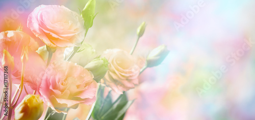 Foto-Duschvorhang - Pink peony flower background (von lily)