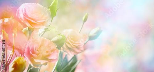 Foto-Duschvorhang - Pink peony flower background