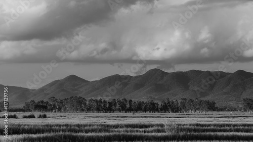 BW rice paddy