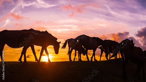 Poster Maroc 野生馬の丘 都井岬 夕景