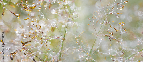 Photo grass with dew drops - a beautiful bokeh background