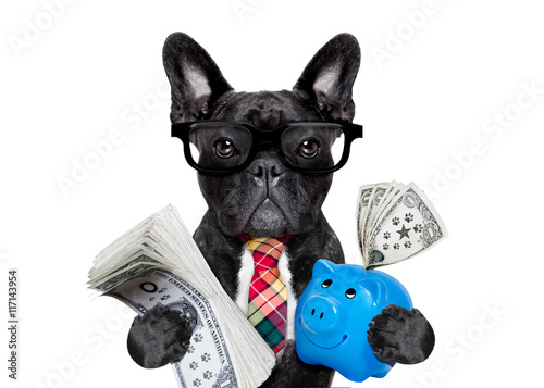 Aluminium Prints Crazy dog dog money and piggy bank