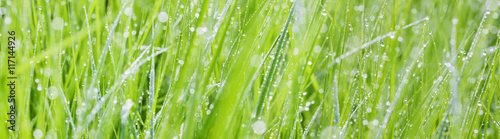 Foto op Aluminium Gras grass with dew drops - a beautiful bokeh background