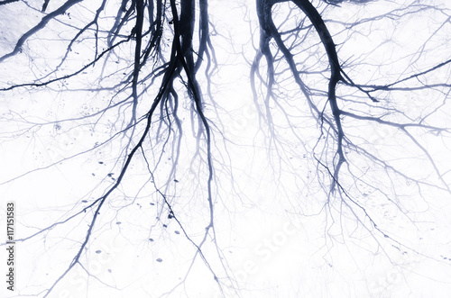 Photo spooky abstract tree branches background