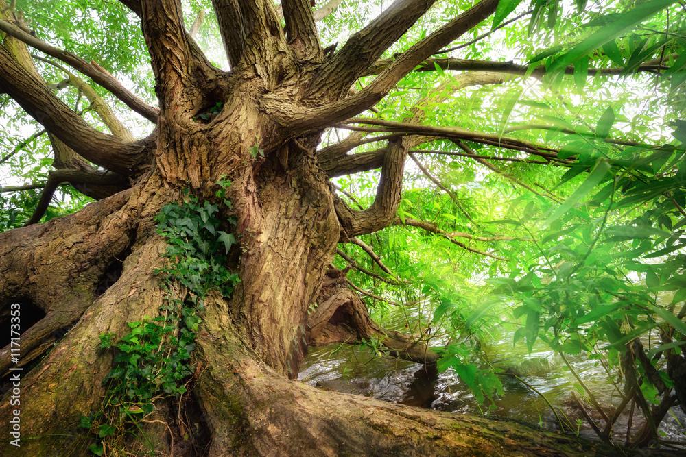 Fototapety, obrazy: Beeindruckender Baumstamm im schönen Licht
