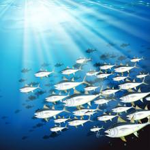 Underwater Scene With School Of Tuna