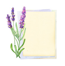 Blank Paper Card With Lavender Flowers, Watercolor Painting, On White Background, Vintage Style