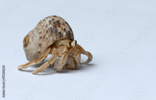Photo Hermit Crab on white background
