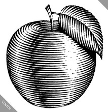 Engraved Isolated Vector Illustration Of An Apple