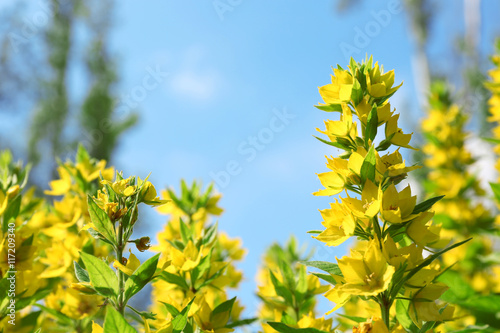 In de dag Narcis Yellow flowers, closeup