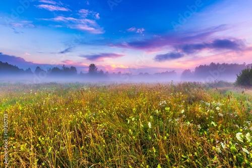 Foto op Plexiglas Weide, Moeras Wild foggy meadow landscape