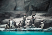 Humboldt Penguins Standing In ...