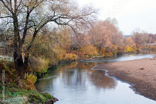 grove in autumn - 117235522