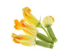 Yellow Zucchini Blossoms,isola...