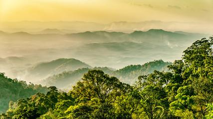 Obraz Regenwald in Malaysia