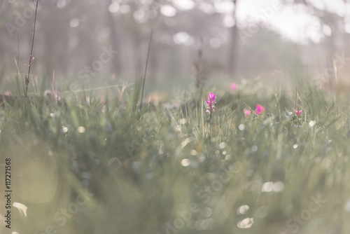 Cadres-photo bureau Pissenlits et eau beautiful siam tulips