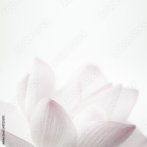 Montage in der Fensternische Lotosblume pink lotus in soft color and blur style for background