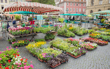 Square Street Market Flower Plant Stand Stall Farmer Town Organic Production Weimar Thuringia Germany