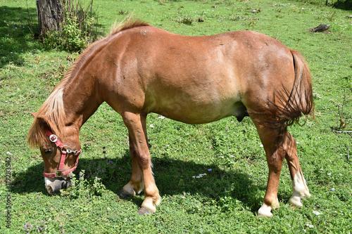 Fotografía  Pony on pasture
