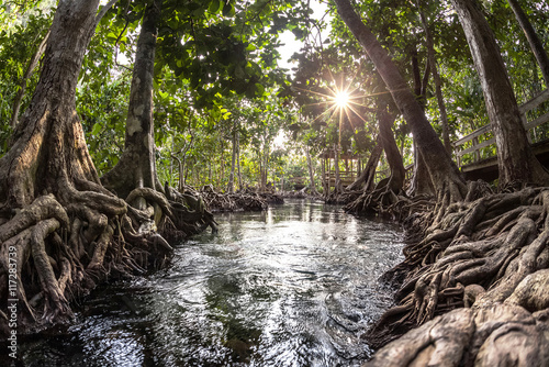 Photo sur Toile Rivière de la forêt Mangrove trees in a peat swamp forest and a river with clear water. Tha Pom canal, Krabi province, Thailand