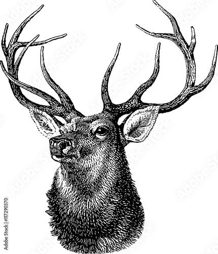 Foto-Vinylboden - Vintage inage deer head (von unorobus)