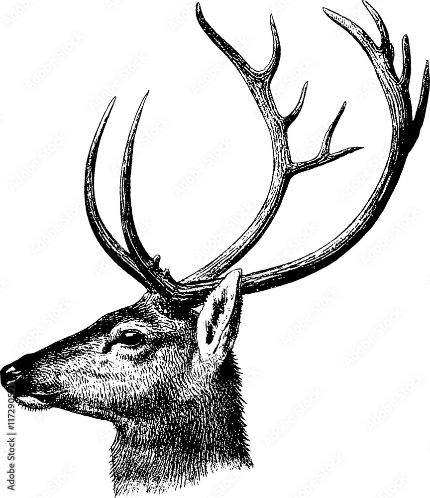 Vintage inage deer head