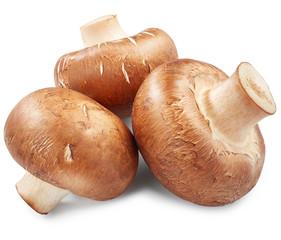 Mushrooms isolated on white background