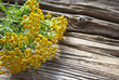 Rainfarn Blütenköpfe - Tanacetum vulgare - auf altem Treibholz / Holz Brett, Hintergrund, Textfreiraum