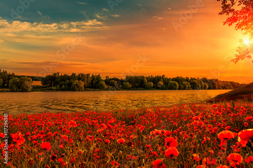 Cadres-photo bureau Orange eclat fantastic Poppy field at sunset. on the river. majestic pictures of nature